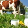 Çiğ süt referans fiyatı belli oldu!