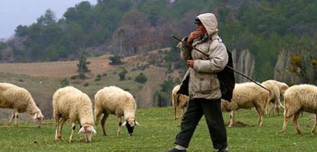 Çobanlar Karacabey'de buluşuyor