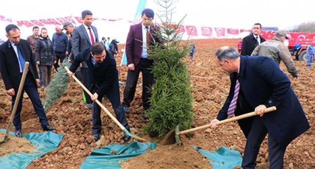 İmralı'ya 42 bin, Bursa'ya 30 bin adalet fidanı!