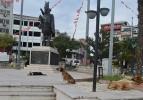 Başıboş köpekler Atatürk Anıtı'nı mesken tuttu