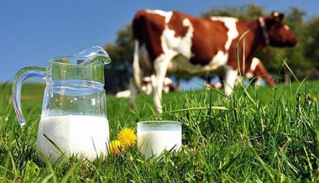 Süt üreticilerine destekleme ödemesi!