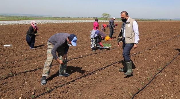 Mevsimlik tarım işçileri Karacabey'de
