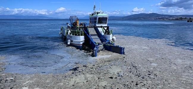 Deniz salyası tarım sektörüne fırsat olabilir!
