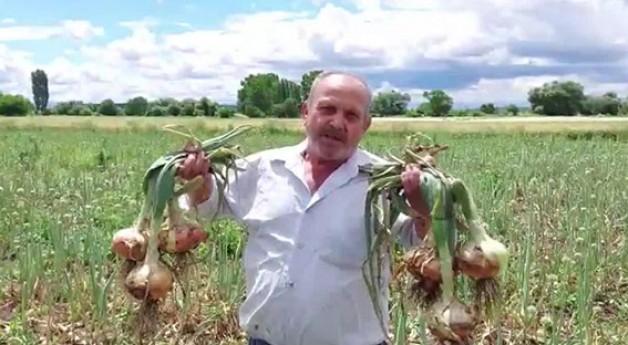 """Soğan üreticisi perişan halde"""