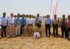 Karacabey'de 'Yerli ve Milli' buğday hasadı