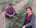 Alternatif tarıma örnek proje: Seracılık