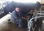 Anlık Süt Kayıt Sistemi başladı
