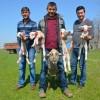 Bir koyun dördüz doğurdu
