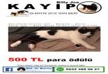 Bu kediyi görene 500 lira ödül