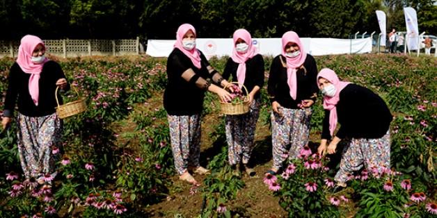 Dağkadılı kadınlara 'ekinezya' desteği