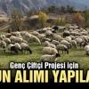 Genç Çiftçi Projesi için koyun ihalesi