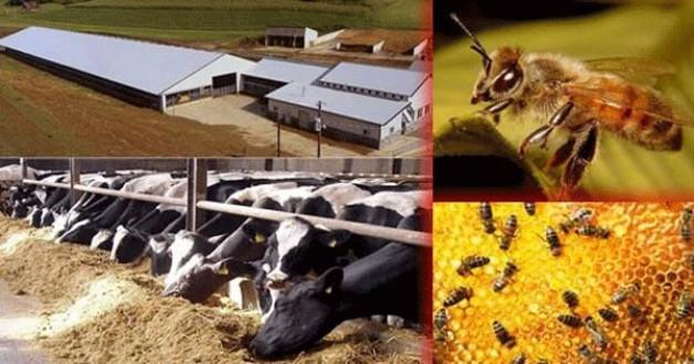 Hayvancılık Desteklemeleri açıklandı