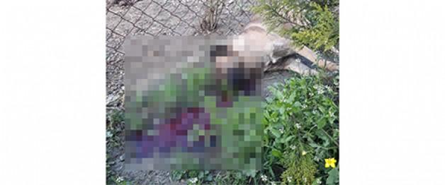Karacabey'de 2 köpek öldürüldü
