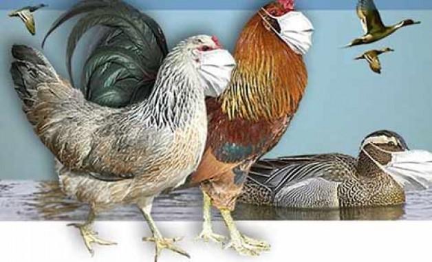 Karacabey'de kuş gribi vakası