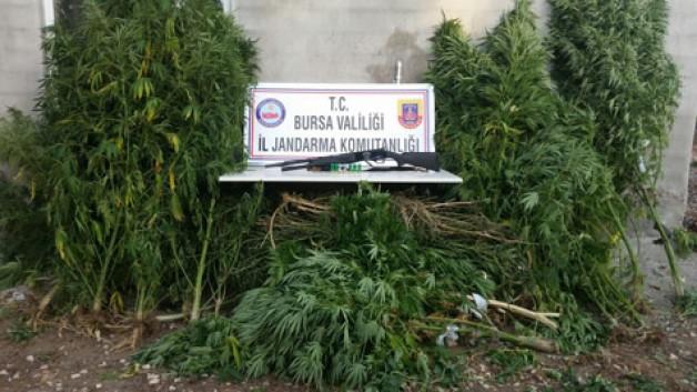 Köy evlerine uyuşturucu baskını
