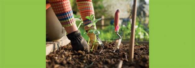 Organik tarım desteğinde son gün!