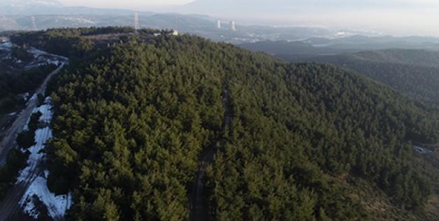 Ormanlarda çevre felaketi!