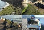 Plajlar yosunlardan arındırılıyor