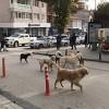 Saldırgan köpekler için kısırlaştırma şart!