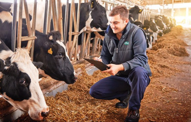 Sütaş'ın inekleri hem süt hem elektrik üretiyor