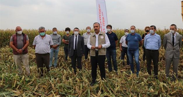 Türkiye'nin tohumluk mısır üretimi Bursa'dan!