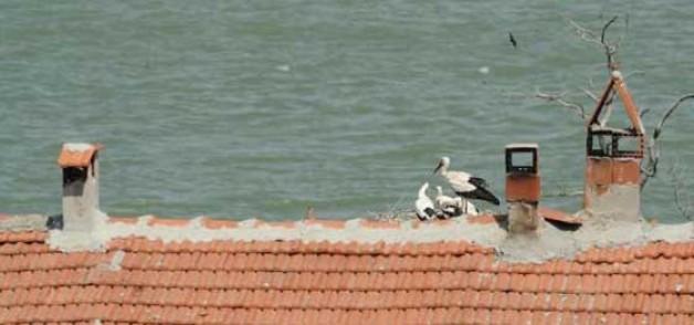 'Ulusal Kuş Konferansı'nda hazırlıklar tamam