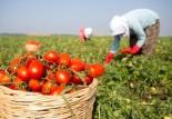 """""""AKP çiftçi üzerinden siyasi şov yapıyor!"""""""