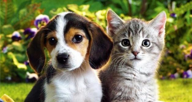 Kedi ve köpeklere ücretsiz mama