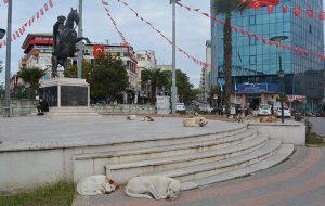 Başıboş-köpekler-2