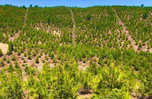 50-yıl-sonrası-için-ormanlarımızı-bugün-gençleştiriyoruz-2