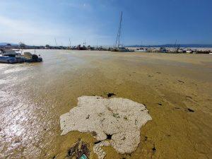 Su Ürünleri'nden 'deniz salyası' incelemesi-2