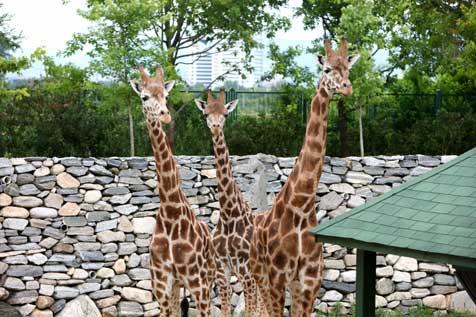 Hayvanat-Bahçesi-yavrularla-şenlendi-4