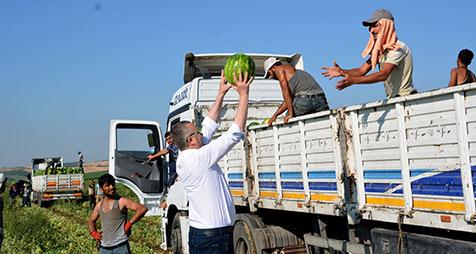 Karacabey'de-karpuz-hasadı-başladı-2