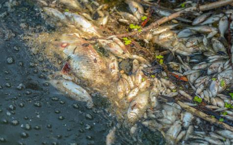 Karadere'de-balık-katliamı-3