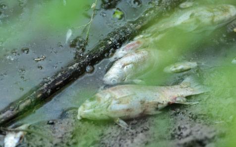 Karadere'de-balık-katliamı-4