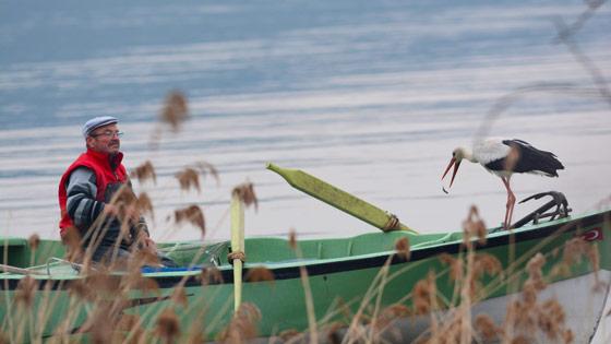 Leylek-ile-balıkçının-hikayesi-2