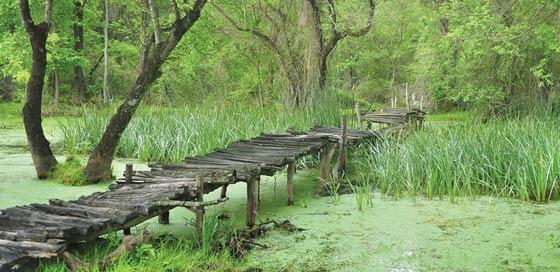 Longoz-Ormanları-turizme-kazandırılıyor-2