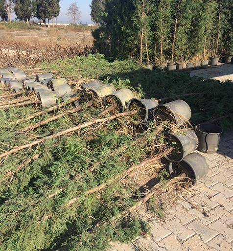 Yeşil-Bakırköy-için-çalışmalar-sürüyor-4